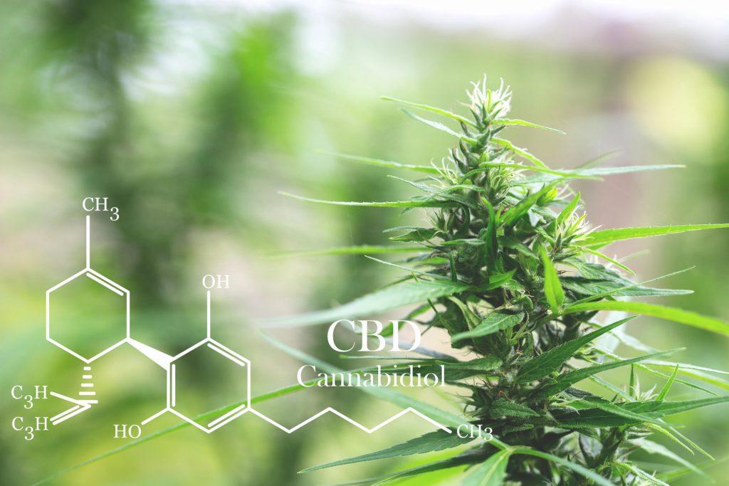La fórmula química para CBD y una planta de cannabis.