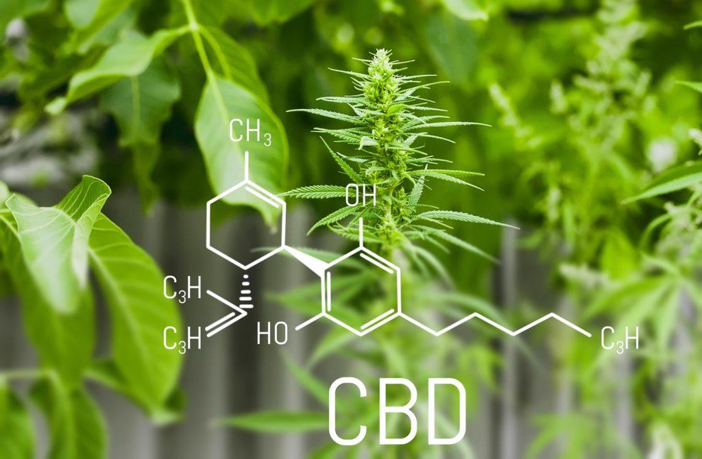Die chemische Formel der CBD mit Cannabis-Pflanzen im Hintergrund