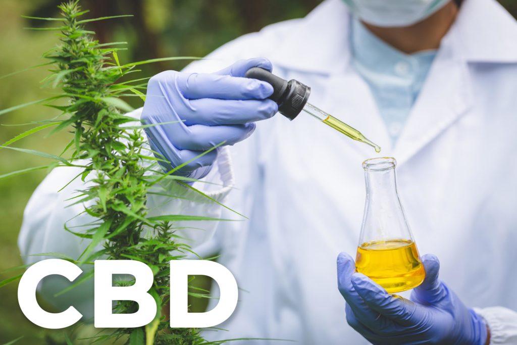Een cannabisplant en een wetenschapper die een pot met CBD-olie houdt