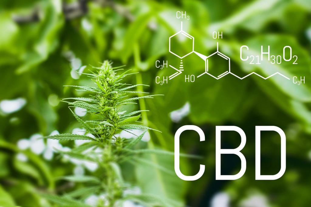 La fórmula química del CBD y una planta de cannabis.