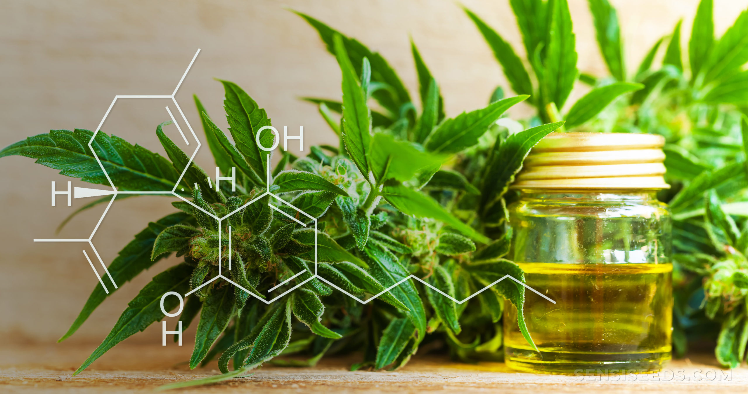 What Is Cannabidiol, and How Is CBD Used in Medicine? - Sensi Seeds