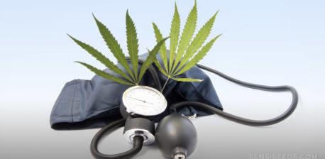 Een bloeddrukmonitor en twee cannabisbladeren