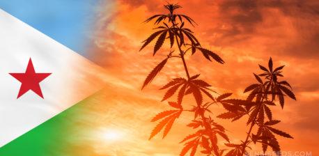 Die Dschibuti-Flagge und eine Cannabis-Pflanze gegen einen Sonnenuntergang