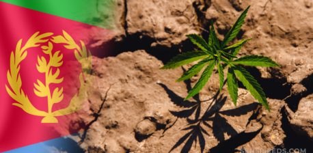 Die eritreie Flagge und ein Cannabis-Anlage, die aus dem Boden wachsen