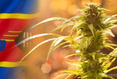 Die Eswatini-Flagge und ein Cannabis-Werk