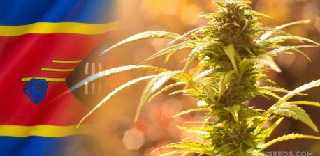 The Eswatini flag and a cannabis plant