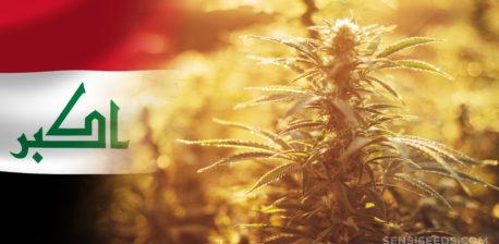 Die Irak-Flagge und ein Cannabis-Werk