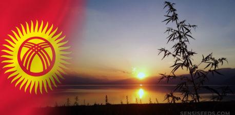 Die Kirgisistan-Flagge und ein Cannabis-Anlage vor einem See- und Bergblick