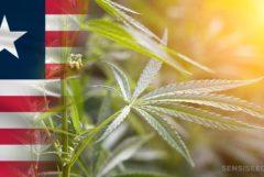 La bandera de Liberia y una planta de cannabis.