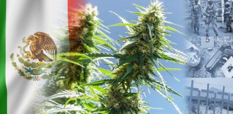Die mexikanische Flagge und eine Cannabis-Pflanze