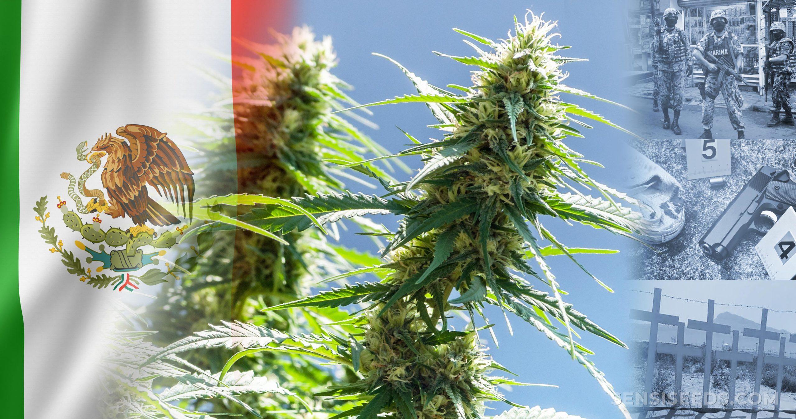 La bandera mexicana y una planta de cannabis.