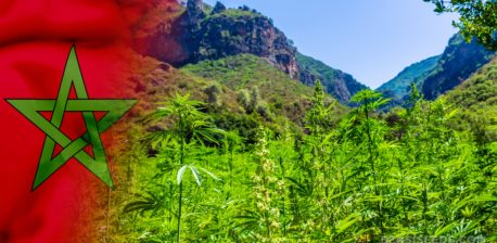 The Moroccon Flag and a field of cannabis plants