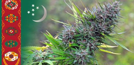 La bandera de Turkmenistán y una planta de cannabis.