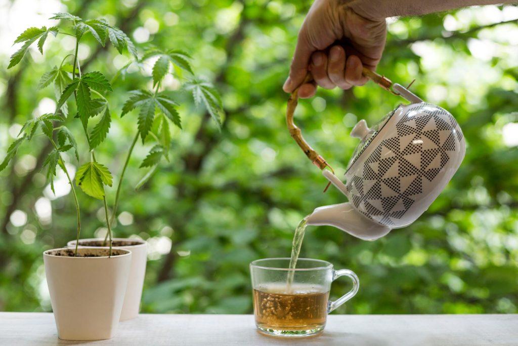 Una persona que vierte un té en la taza de una tetera con plantas de cannabis al lado