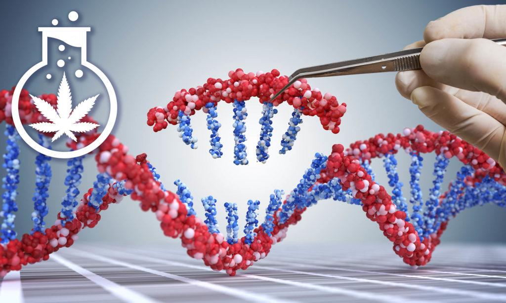 Une main gantée utilisant des pincettes pour prendre une petite pièce d'un code génétique