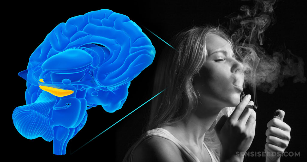 An animation of a brain and a woman smoking a joint