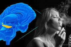 Een animatie van een hersenen en een vrouw die een joint rookt