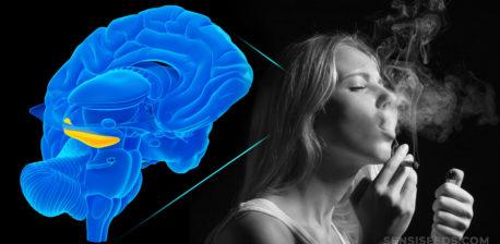 Una animación de un cerebro y una mujer fumando una articulación.
