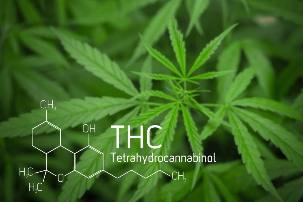 Die chemische Formel von THC mit einer Cannabisanlage im Hintergrund