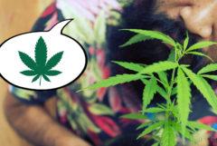 Ein Mann mit einem Bart, der eine Cannabis-Pflanze annimmt