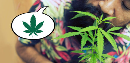 A man with a beard smelling a cannabis plant up close