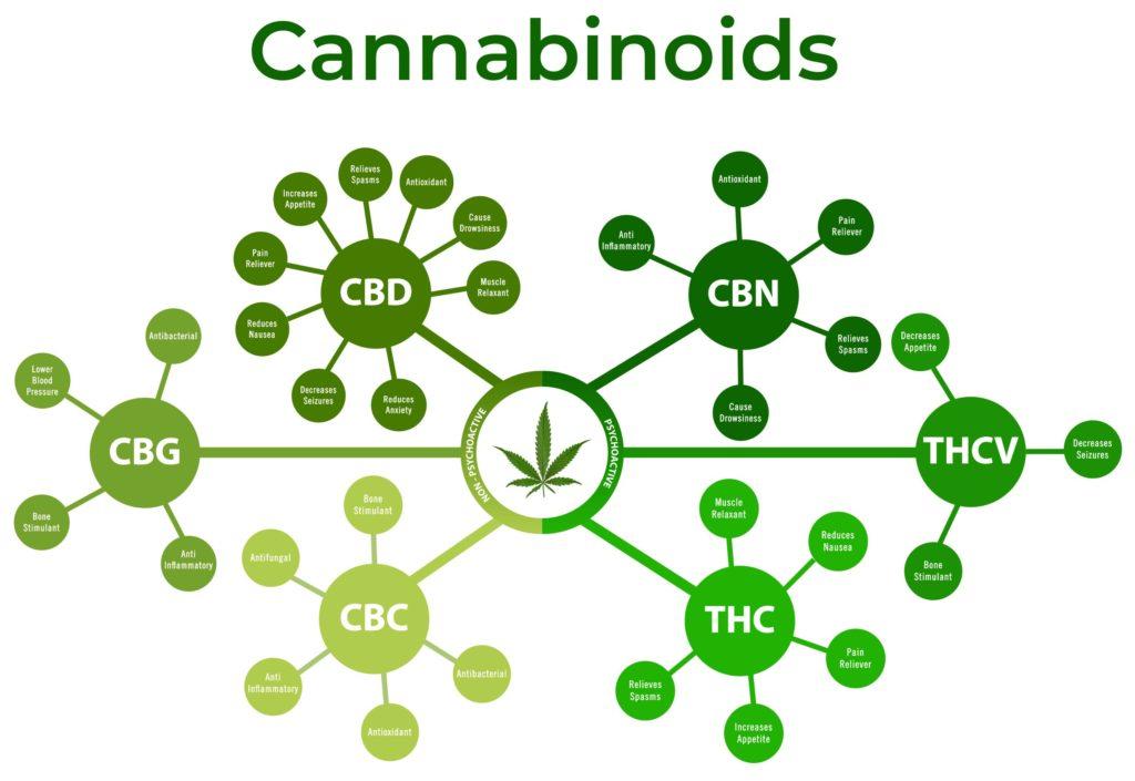 Un diagramme de cannabinoïdes