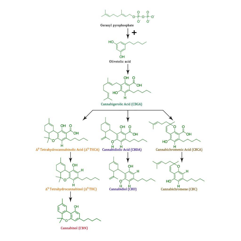 Un diagrama de diferentes ecuaciones químicas.