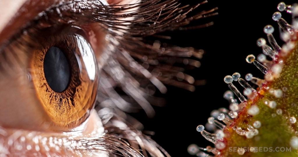 Un œil humain avec un iris brun