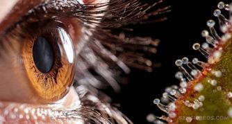 Een menselijk oog met een bruine iris