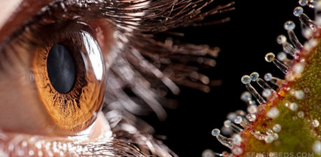 A human eye with a brown iris