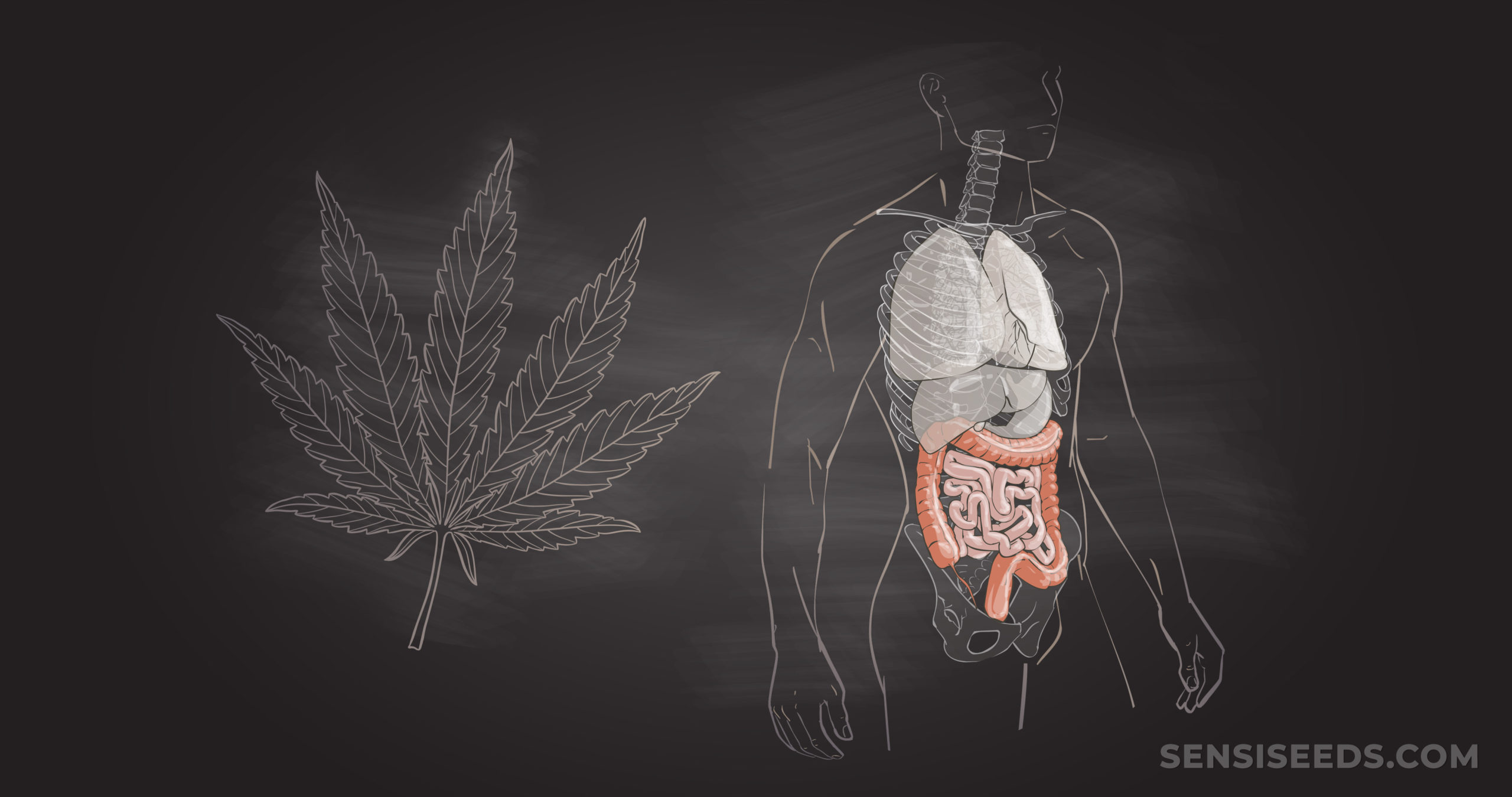 CBD for GI Issues: Benefits & Treatment ...