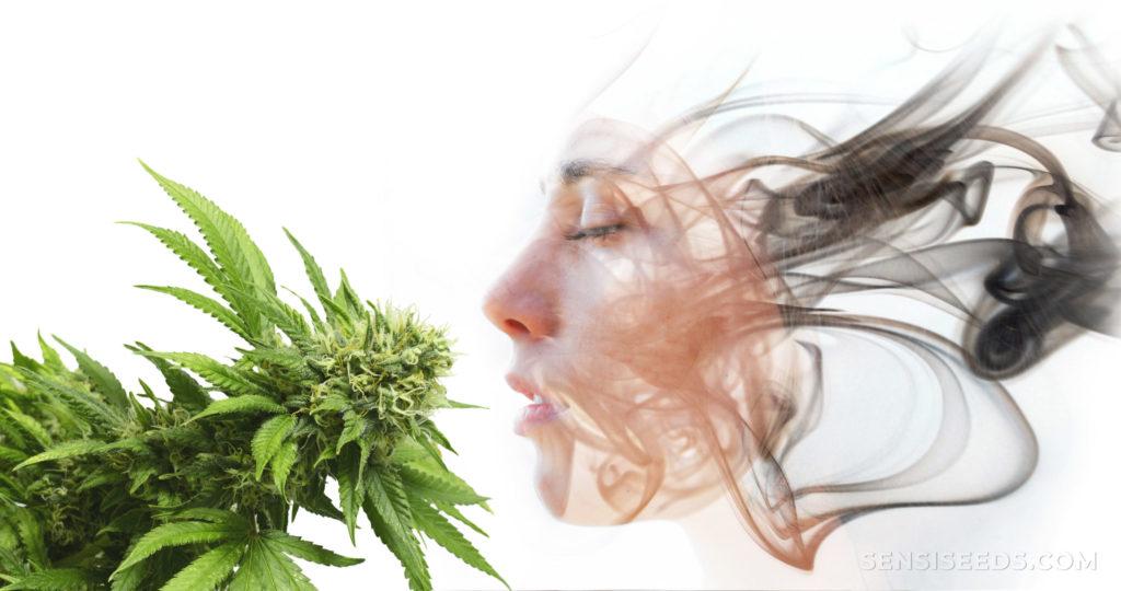 Een gezicht uit rook keek naar een cannabisplant