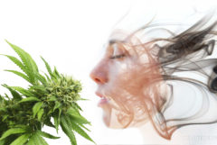 A face formed out of smoke looked at a cannabis plant