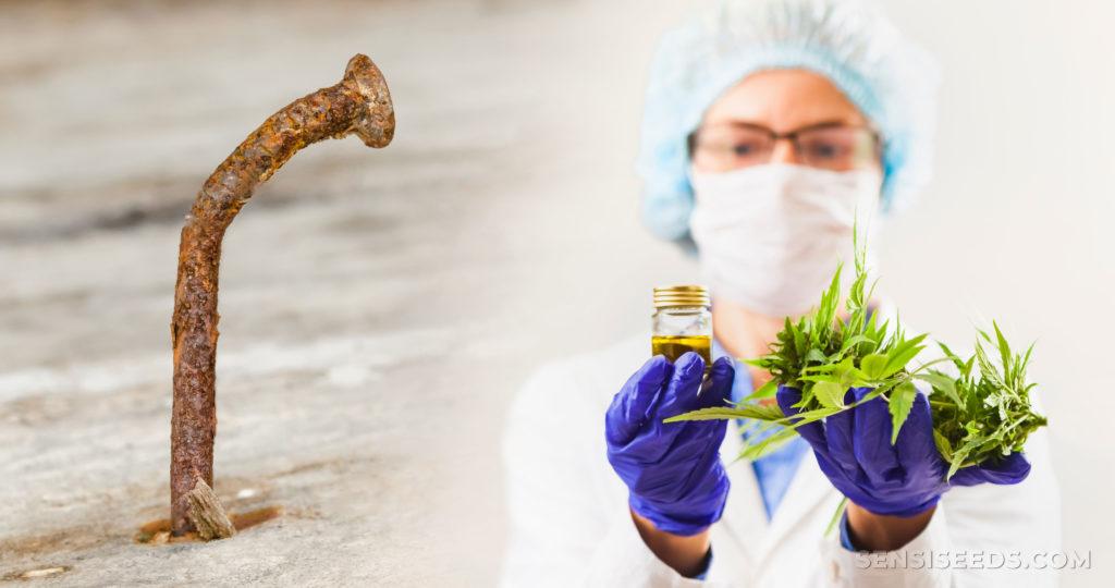 Un clou rouillé et une femme en PPE tenant un pot et des feuilles de cannabis