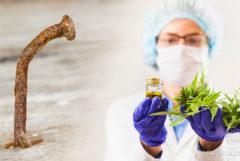Een roestige spijker en een vrouwen in PPE die een pot en cannabisbladeren houden