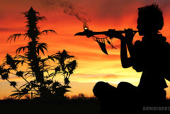 La silueta de una persona fumando un tubo y una planta de cannabis contra una puesta de sol naranja.