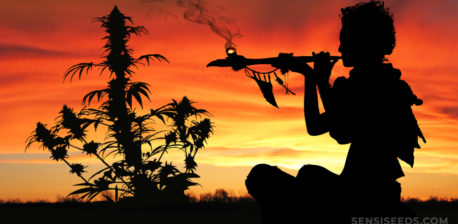 The silhouette of a person smoking a pipe and a cannabis plant against an orange sunset