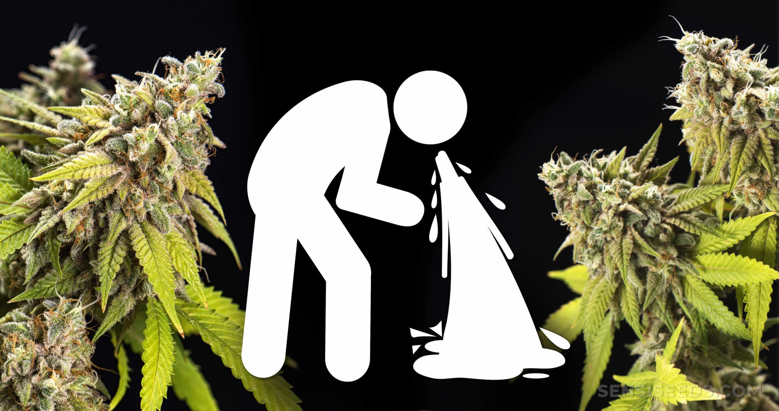 What Is Cannabinoid Hyperemesis Syndrome Chs Disease Sensi Seeds