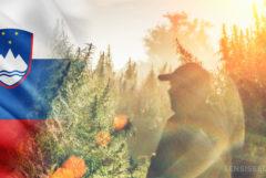 Le drapeau slovène et la silhouette d'un homme dans un champ de plantes de cannabis