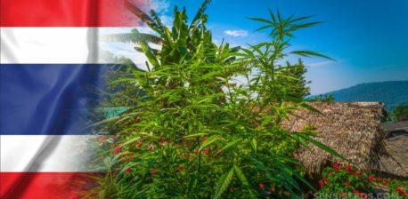 Die thailändische Flagge und Cannabispflanzen, die von einem Busch vor einer Hütte wachsen