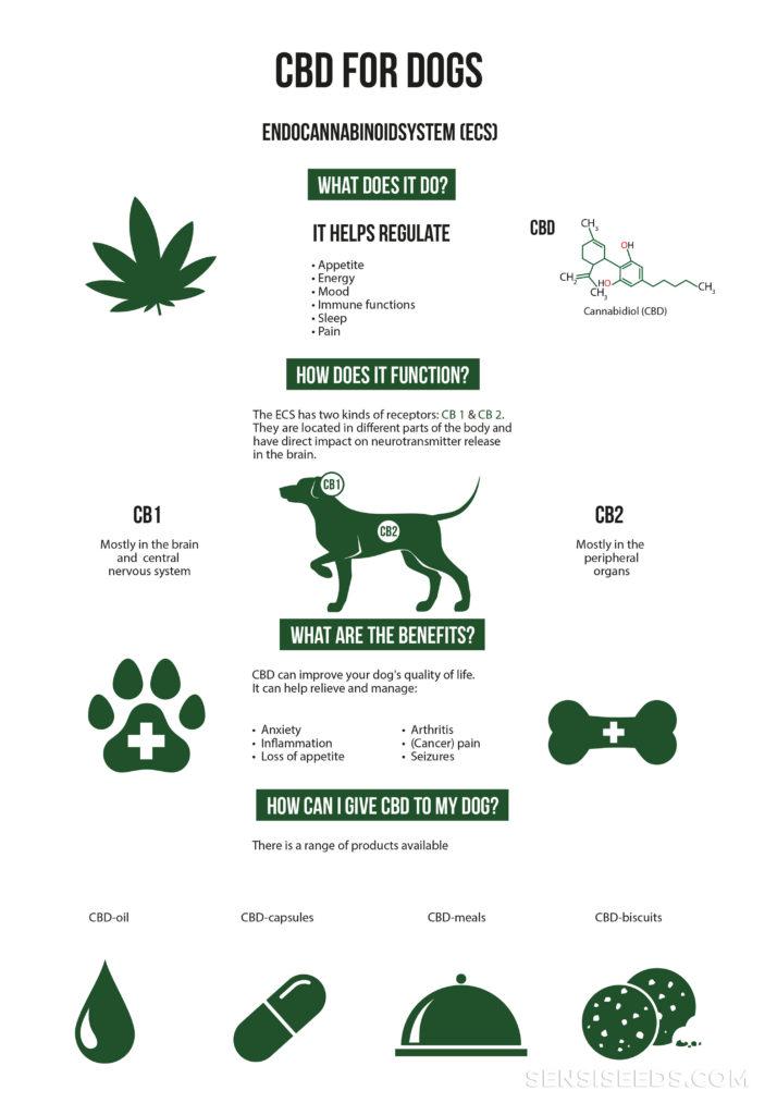 Ein Poster mit der Funktion und Vorteile von CBD für Hunde