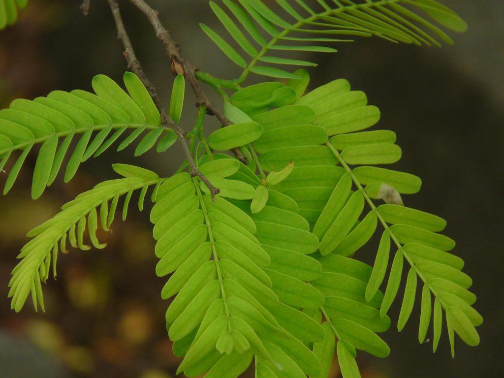 Eine Pflanze mit grünen ovalen Blättern