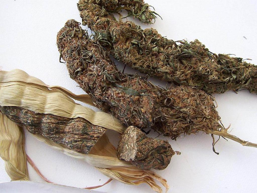 Three dried Malawi Gold 'cobs'
