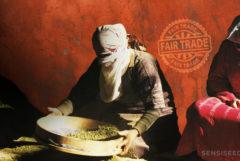 Afghans Sieving Cannabis à l'intérieur