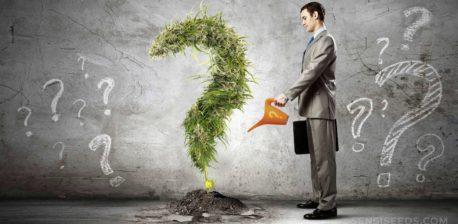 Ein Mann, der eine Cannabis-Pflanze gießt, die wie ein Fragezeichen geformt ist