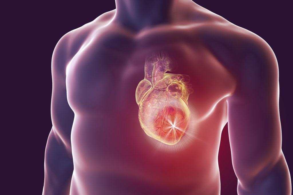 An anatomical heart inside a human body