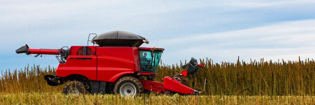 Una máquina de cosecha roja en un campo de cáñamo.