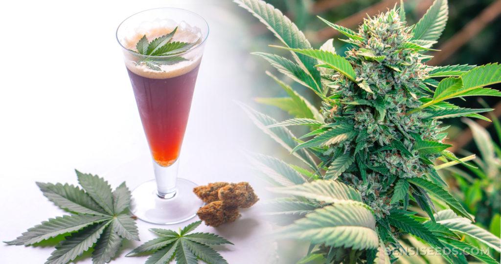 Un vaso de cerveza de cannabis y una planta de cannabis.