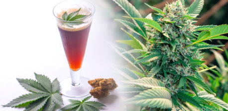 A glass of cannabis beer and a cannabis plant