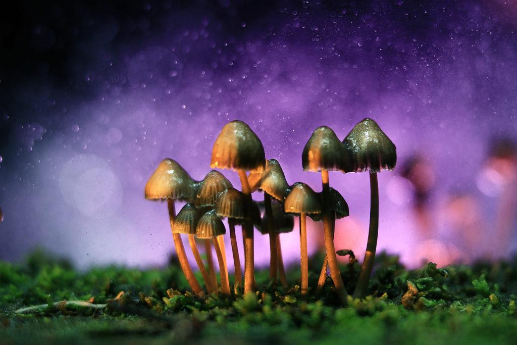 Hallucinogene paddestoelen tegen een paarse hemel
